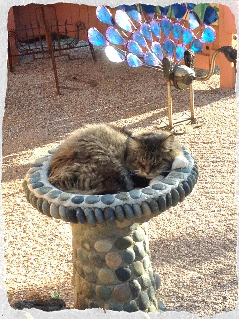 Cat Nap At Cactus Joe S Cactus Joe S Las Vegas Nursery