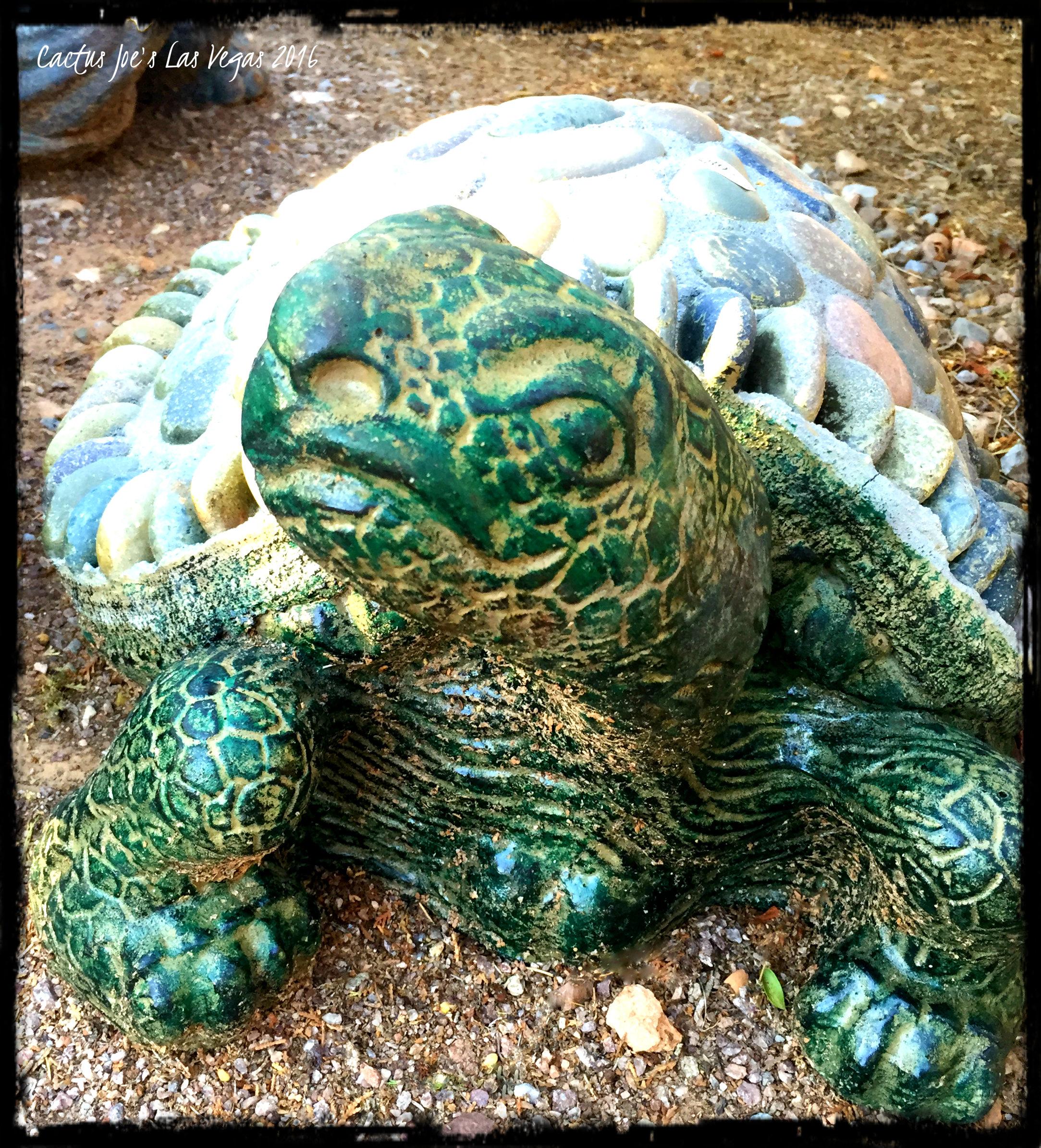 July 2016 Sale Cactus Joe S Las Vegas Nursery